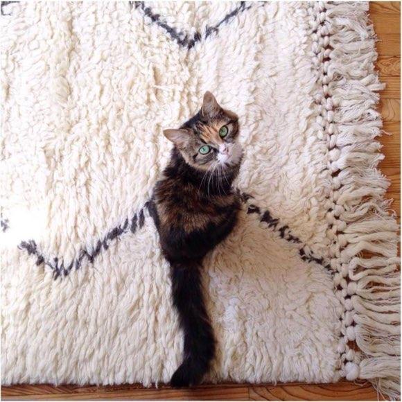 tapis style berb re bicolore avec des franges nou es le chat n est pas fourni taaora blog. Black Bedroom Furniture Sets. Home Design Ideas