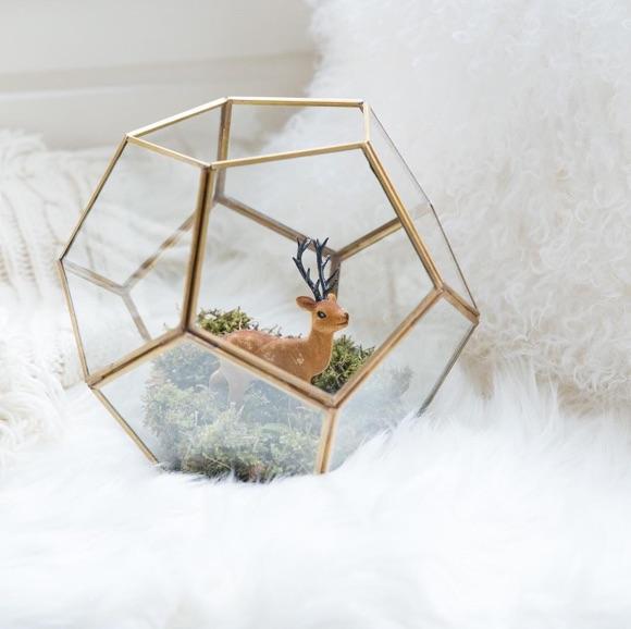 Terrarium en verre avec plusieurs côtés